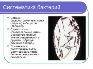 Систематика бактерий Самые распространенные: кокки (шарики) и бациллы (палочки).
