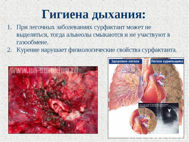 Гигиена дыхания: При легочных заболеваниях сурфактант может не выделяться, тогда альвеолы смыкаются и не участвуют в газообмене. Курение нарушает физиологические свойства сурфактанта.