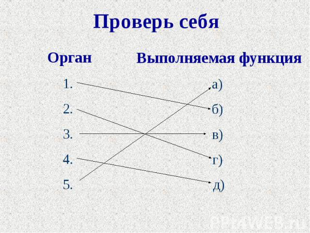Проверь себя Орган1. 2. 3. 4. 5. Выполняемая функцияа) б) в) г) д)