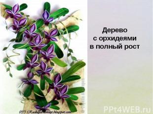 Дерево с орхидеями в полный рост