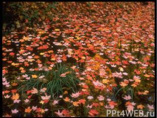 Кружит осенний листопадПластинкой яркой, звонкой,И листья павшие скользятОранжев