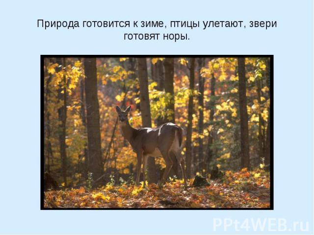 Природа готовится к зиме, птицы улетают, звери готовят норы.