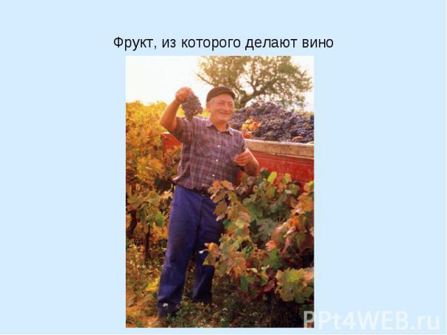 Фрукт, из которого делают вино