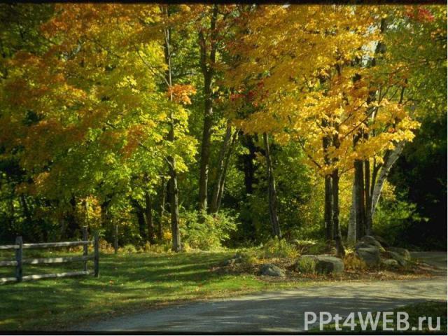 Поля пусты и осели от дождя. Рощи, перелески раздевает месяц – «листобой», за слякоть прозванный «грязником». Рыжий октябрь На пригорке прилег,Теплый ласкает его ветерок.Шепчутся тихо Поникшие травыВозле широких и пыльных дорог.Желтые листья роняют …