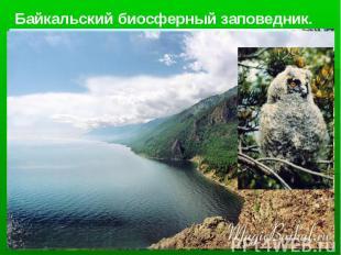 Байкальский биосферный заповедник.