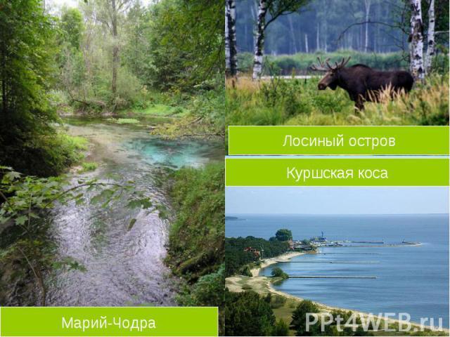 Лосиный остров Куршская косаМарий-Чодра