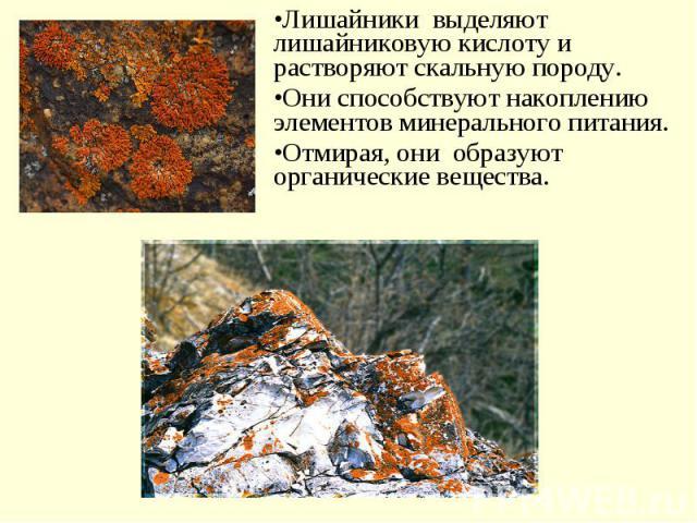 Лишайники выделяют лишайниковую кислоту и растворяют скальную породу. Они способствуют накоплению элементов минерального питания.Отмирая, они образуют органические вещества.
