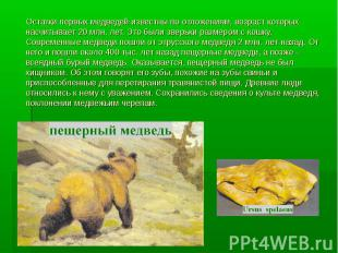 Остатки первых медведей известны по отложениям, возраст которых насчитывает 20 м