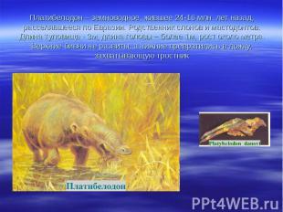 Платибелодон – земноводное, жившее 24-16 млн. лет назад, расселявшееся по Еврази