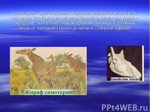 Самотерий – один из древних жирафов, живший от 10 до 5 млн. лет назад. Это был к