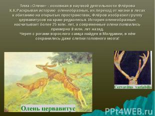 Тема «Олени» - основная в научной деятельности Флёрова К.К.Раскрывая историю оле