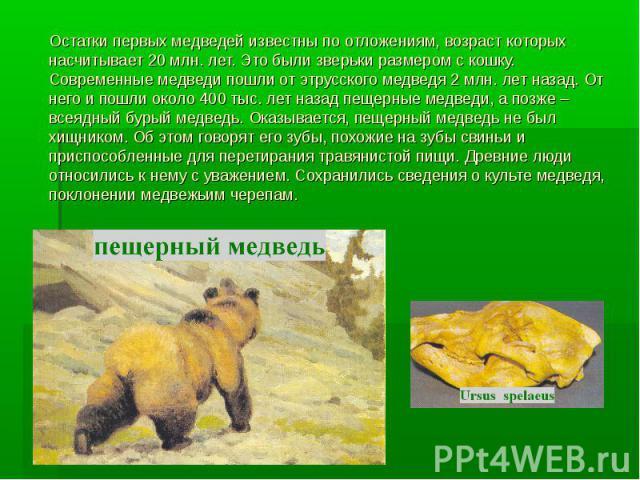 Остатки первых медведей известны по отложениям, возраст которых насчитывает 20 млн. лет. Это были зверьки размером с кошку. Современные медведи пошли от этрусского медведя 2 млн. лет назад. От него и пошли около 400 тыс. лет назад пещерные медведи, …