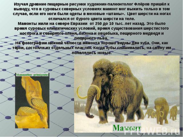 Изучая древние пещерные рисунки художник-палеонтолог Флёров пришёл к выводу, что в суровых северных условиях мамонт мог выжить только в том случае, если его ноги были одеты в меховые «штаны». Цвет шерсти на ногах отличался от бурого цвета шерсти на …
