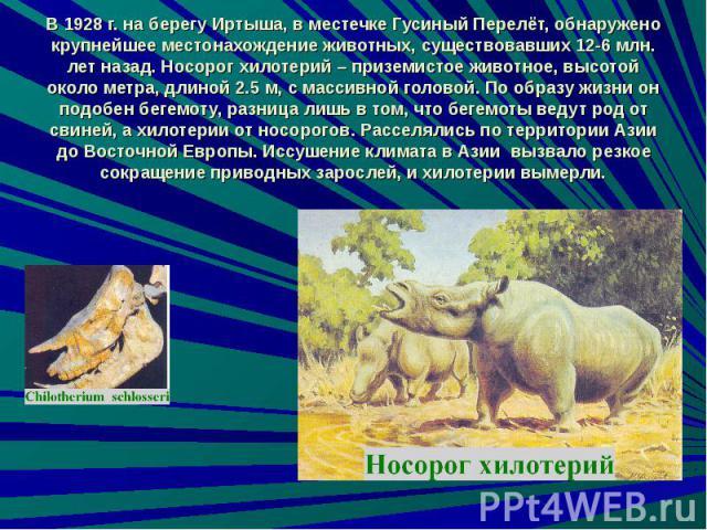 В 1928 г. на берегу Иртыша, в местечке Гусиный Перелёт, обнаружено крупнейшее местонахождение животных, существовавших 12-6 млн. лет назад. Носорог хилотерий – приземистое животное, высотой около метра, длиной 2.5 м, с массивной головой. По образу ж…
