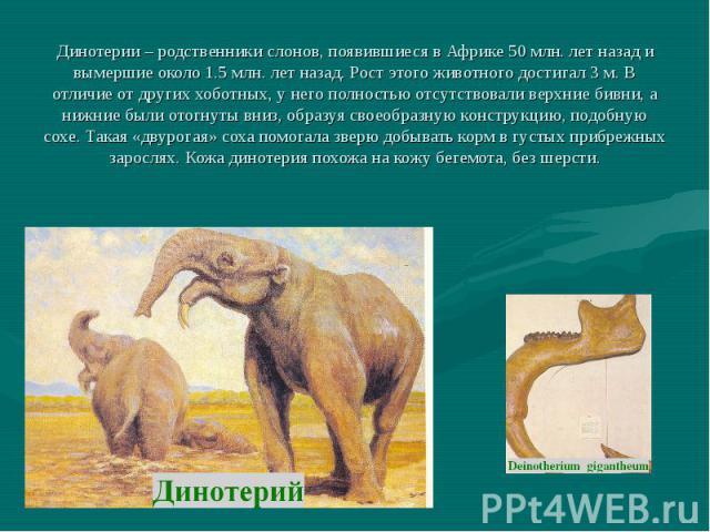Динотерии – родственники слонов, появившиеся в Африке 50 млн. лет назад и вымершие около 1.5 млн. лет назад. Рост этого животного достигал 3 м. В отличие от других хоботных, у него полностью отсутствовали верхние бивни, а нижние были отогнуты вниз, …