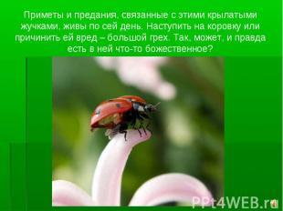 Приметы и предания, связанные с этими крылатыми жучками, живы по сей день. Насту