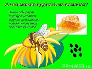 А что можно сделать из семечек? Пчелы собирают пыльцу с желтого цветка, из котор