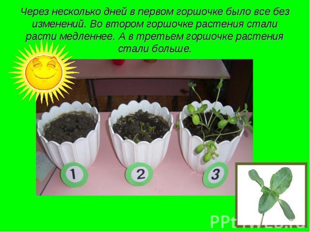 Через несколько дней в первом горшочке было все без изменений. Во втором горшочке растения стали расти медленнее. А в третьем горшочке растения стали больше.