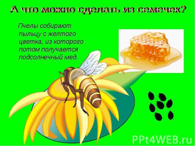 А что можно сделать из семечек? Пчелы собирают пыльцу с желтого цветка, из которого потом получается подсолнечный мед.