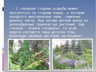- С северной стороны усадьбы можно прогуляться по старому парку, в котором наход