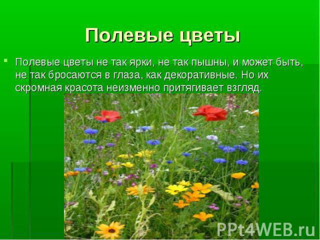 Полевые цветы Полевые цветы не так ярки, не так пышны, и может быть, не так бросаются в глаза, как декоративные. Но их скромная красота неизменно притягивает взгляд.
