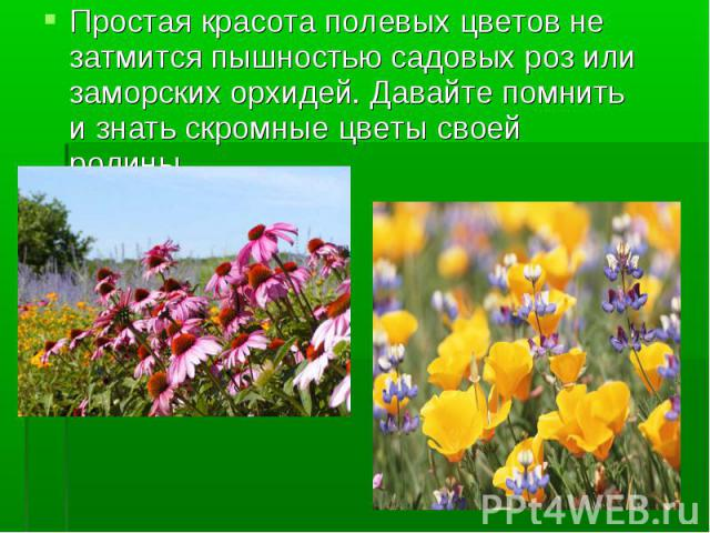 Простая красота полевых цветов не затмится пышностью садовых роз или заморских орхидей. Давайте помнить и знать скромные цветы своей родины.