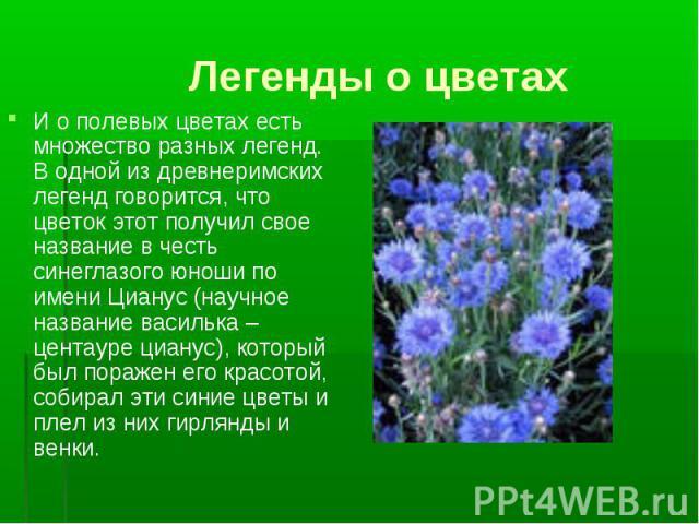 Легенды о цветах И о полевых цветах есть множество разных легенд. В одной из древнеримских легенд говорится, что цветок этот получил свое название в честь синеглазого юноши по имени Цианус (научное название василька – центауре цианус), который был п…