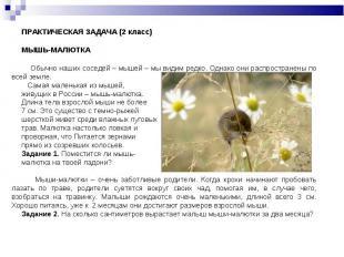 ПРАКТИЧЕСКАЯ ЗАДАЧА (2 класс)МЫШЬ-МАЛЮТКА Обычно наших соседей – мышей – мы види