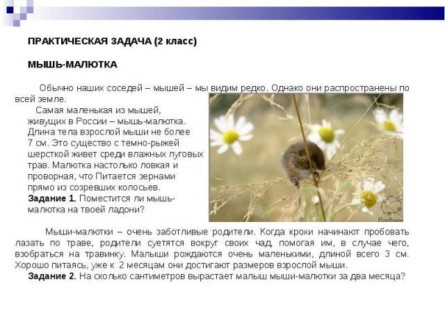 ПРАКТИЧЕСКАЯ ЗАДАЧА (2 класс)МЫШЬ-МАЛЮТКА Обычно наших соседей – мышей – мы видим редко. Однако они распространены по всей земле. Самая маленькая из мышей, живущих в России – мышь-малютка. Длина тела взрослой мыши не более 7 см. Это существо с темно…