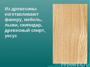 Из древесины изготавливают фанеру, мебель, лыжи, скипидар, древесный спирт, уксу