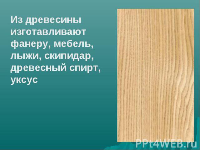Из древесины изготавливают фанеру, мебель, лыжи, скипидар, древесный спирт, уксус