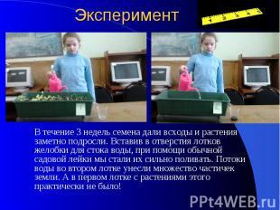 Эксперимент В течение 3 недель семена дали всходы и растения заметно подросли. В