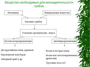 Вещества необходимые для жизнедеятельности грибов Деструктивная гниль деревьевКр