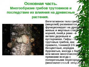 Основная часть.Многообразие грибов трутовиков и последствие их влияния на древес