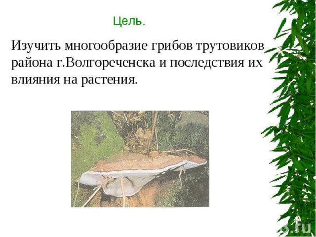 Цель. Изучить многообразие грибов трутовиков района г.Волгореченска и последствия их влияния на растения.