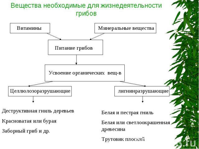 Вещества необходимые для жизнедеятельности грибов Деструктивная гниль деревьевКрасноватая или бураяЗаборный гриб и др.Белая и пестрая гнильБелая или светлоокрашенная древесинаТрутовик плоский