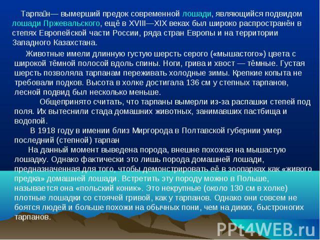 Тарпан— вымерший предок современной лошади, являющийся подвидом лошади Пржевальского, ещё в XVIII—XIX веках был широко распространён в степях Европейской части России, ряда стран Европы и на территории Западного Казахстана. Животные имели длинную гу…