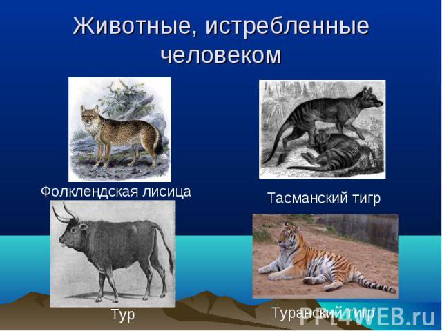 Животные, истребленные человеком