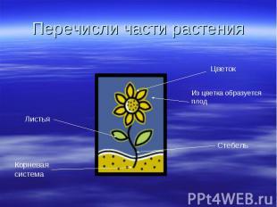 Перечисли части растения