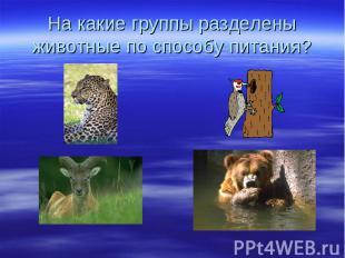 На какие группы разделены животные по способу питания?