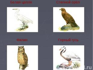 Белая цапля Степной орёл Филин Горный гусь