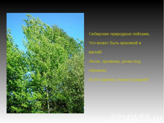 Сибирские природные пейзажи,Что может быть красивей и милей!Лесок, тропинка, речка под обрывом,И нет картины лучше и родней!