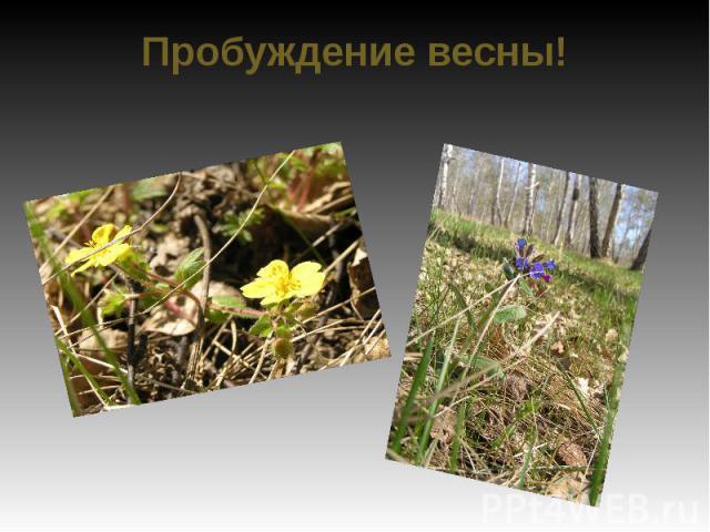 Пробуждение весны!