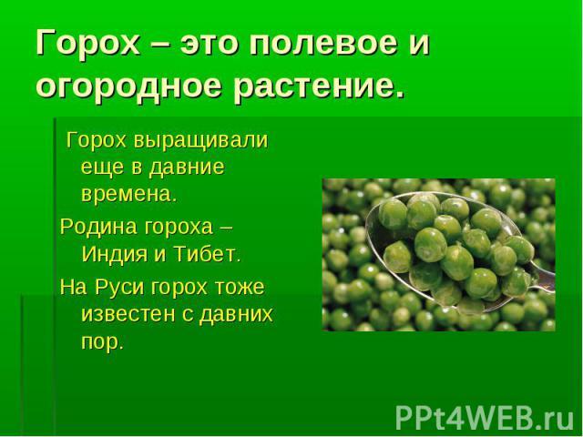 Горох – это полевое и огородное растение. Горох выращивали еще в давние времена.Родина гороха – Индия и Тибет.На Руси горох тоже известен с давних пор.