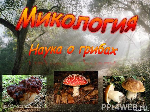 МикологияНаука о грибах