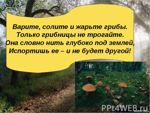 Варите, солите и жарьте грибы.Только грибницы не трогайте.Она словно нить глубоко под землей,Испортишь ее – и не будет другой!