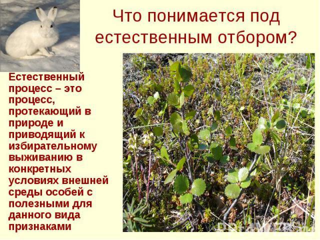 Что понимается под естественным отбором? Естественный процесс – это процесс, протекающий в природе и приводящий к избирательному выживанию в конкретных условиях внешней среды особей с полезными для данного вида признаками