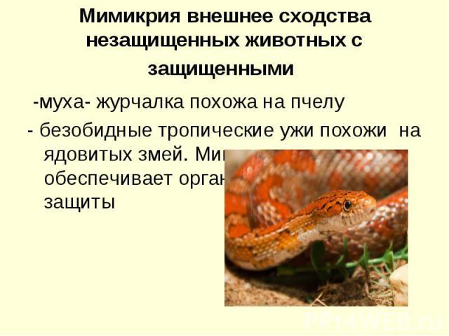 Мимикрия внешнее сходства незащищенных животных с защищенными -муха- журчалка похожа на пчелу- безобидные тропические ужи похожи на ядовитых змей. Мимикрия не обеспечивает организму безусловной защиты