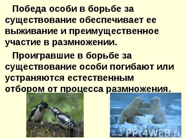 Победа особи в борьбе за существование обеспечивает ее выживание и преимущественное участие в размножении. Проигравшие в борьбе за существование особи погибают или устраняются естественным отбором от процесса размножения.
