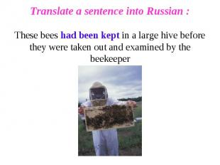 Translate a sentence into Russian :These bees had been kept in a large hive befo